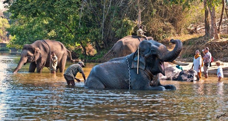 dubare-elephant-camp-coorg